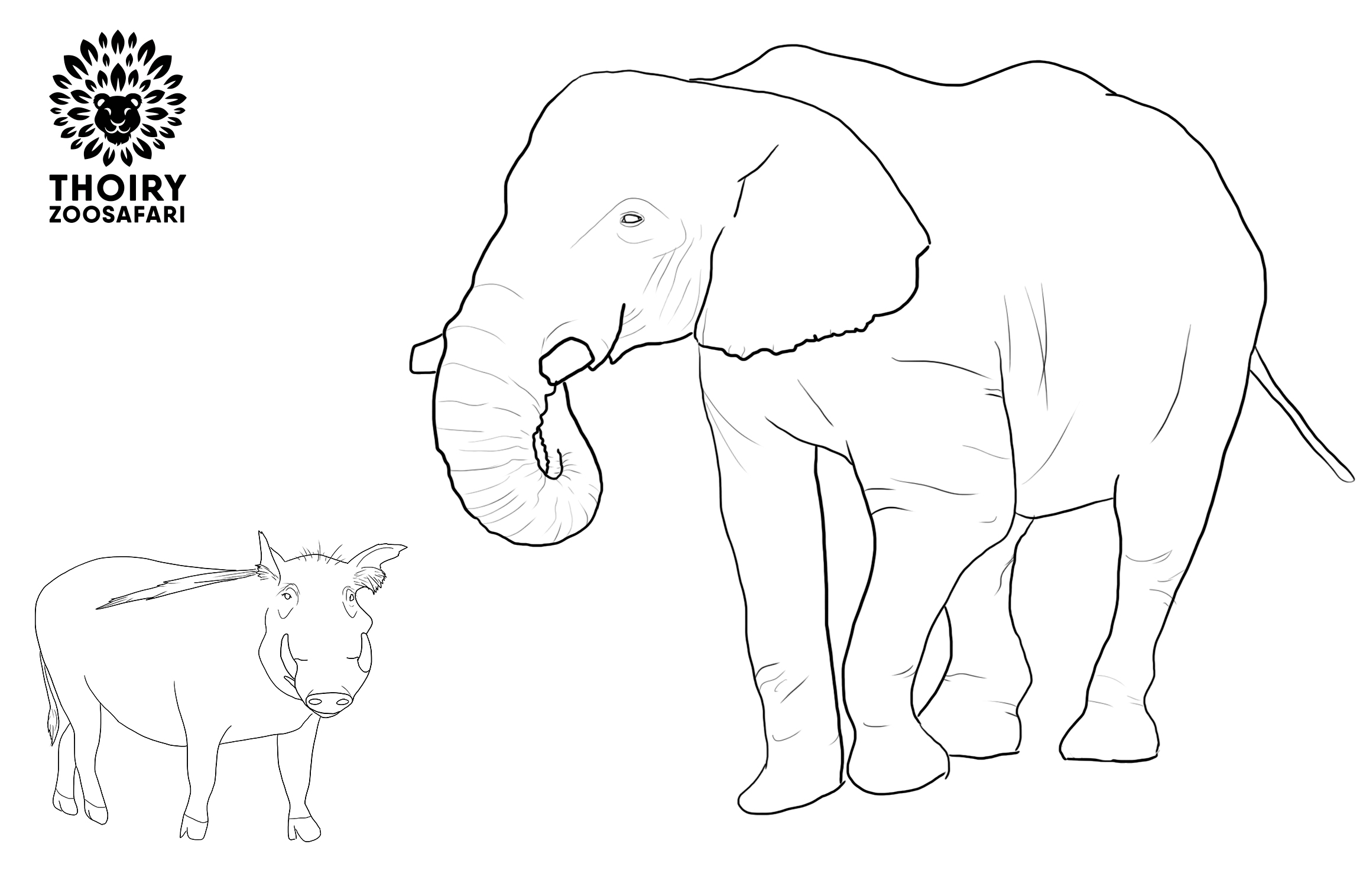 coloriage elephant et phacohere